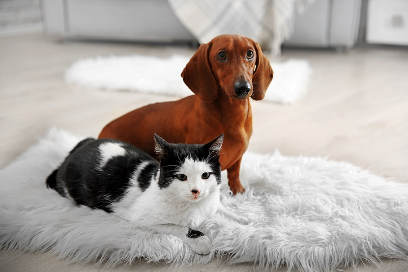 A pet subject: don't assume in strata developments