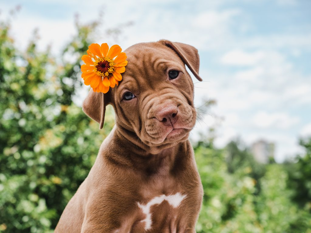 6 tips to get your dog ready for summer