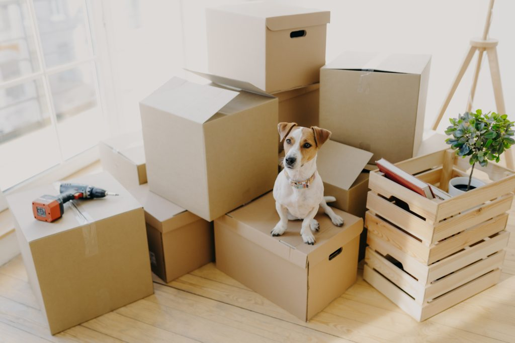 Top tips for moving house with your dog