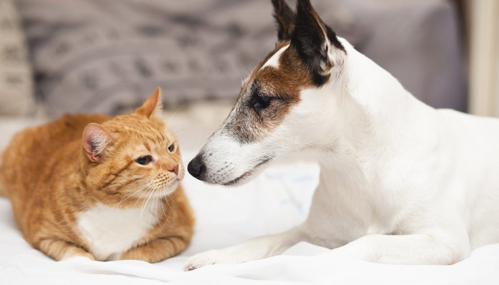 Pet ownership: what you can and can't do